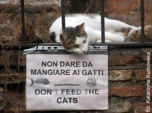 Rzymskie koty