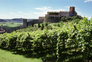 Malvasia: uva e vino buoni ovunque