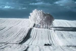 Polonia: gli splendidi scatti a infrarossi del fotografo Przemyslaw Kruk