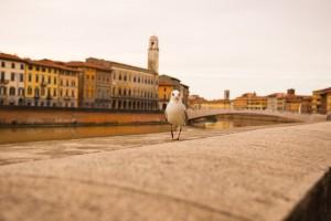Un giorno a Pisa