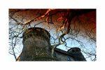 Skarby z kamienia, twierdze z tufu i zaczarowane lasy dawnej Tuscii