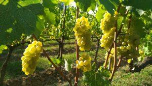 Franciacorta – odpowiedni rywal dla champagne
